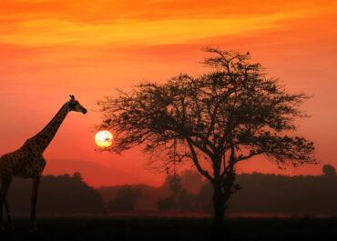 Viaje a África con Grupo Velada 2021